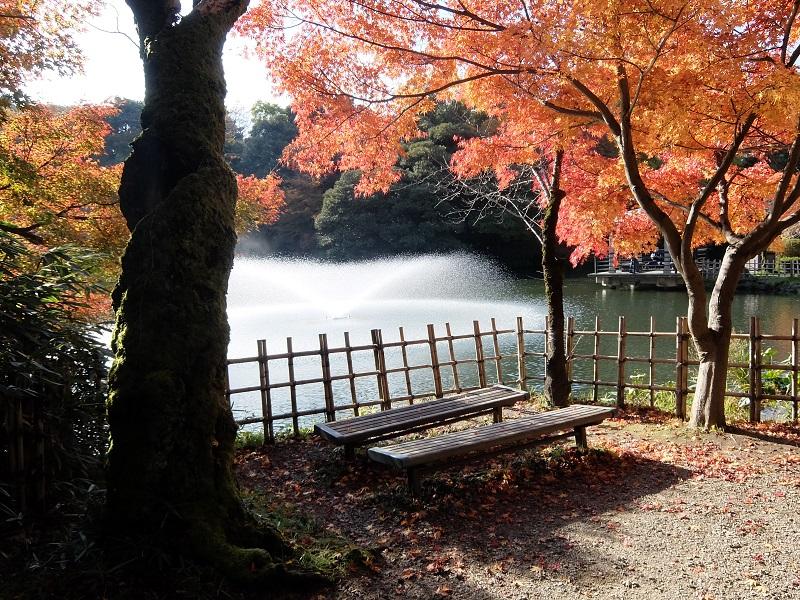 11月の高岡古城公園の紅葉