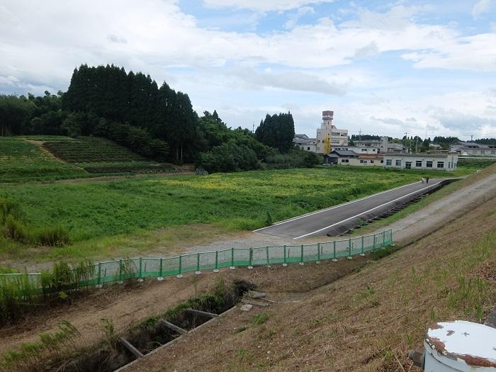 富山県立大学のひまわり迷路